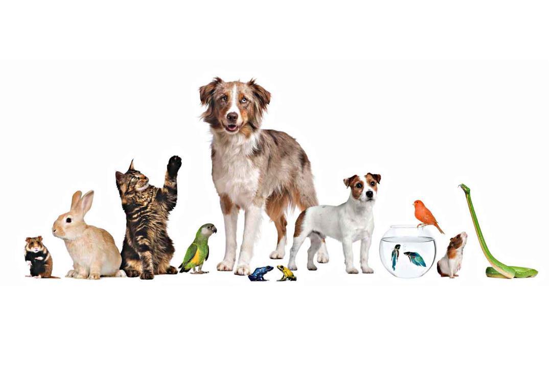 æteriske olier til hund, kat og andre kæeldyr